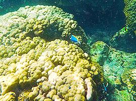 Beim schnorcheln die faszinierende Unterwasserwelt bestaunen