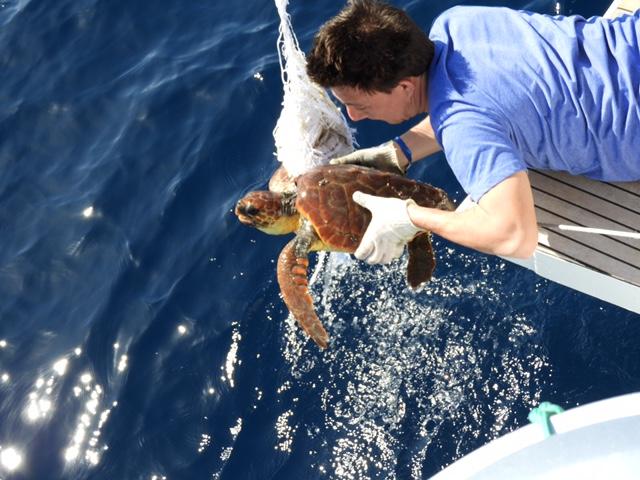 Schildkröte von einem Netz befreien | Gemeinsam mit sailwithus die Meeresverschmutzung stoppen