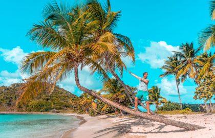 Die Crew genießt die traumhaften karibischen Inseln, Mann surft auf Palme direkt am Wasser